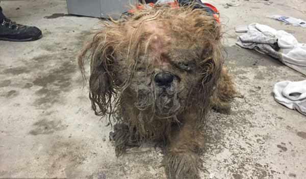 perierga.gr - Η απίστευτη μεταμόρφωση ενός σκύλου!