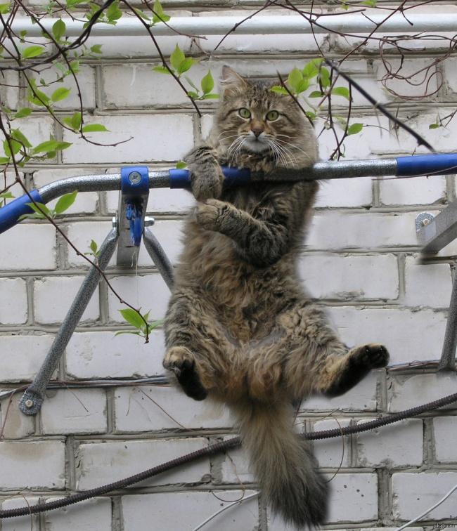 perierga.gr - Ζώα που ξέρουν πώς να διατηρούνται σε φόρμα!