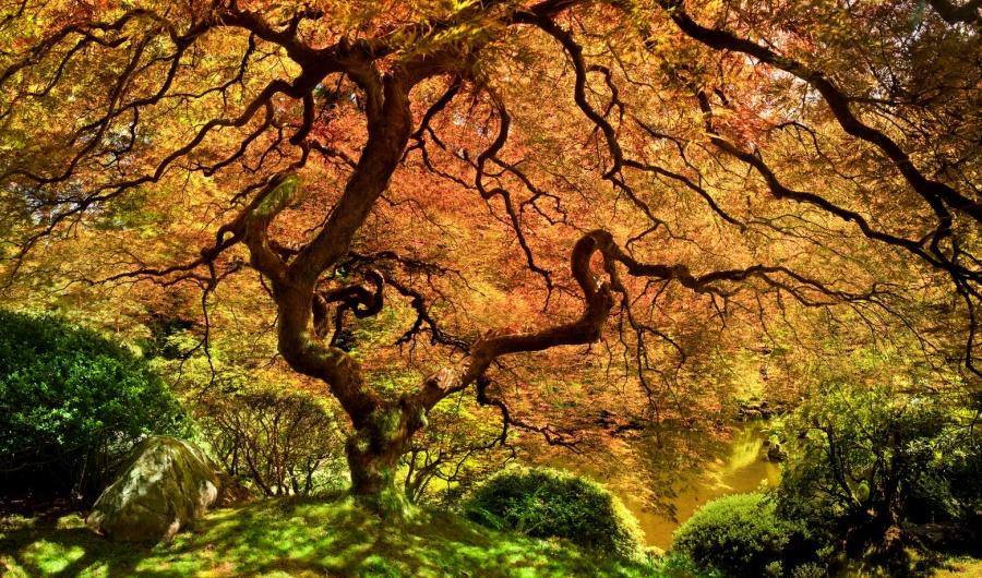 perierga.gr - Απίστευτες... δεντρο-δημιουργίες της φύσης!