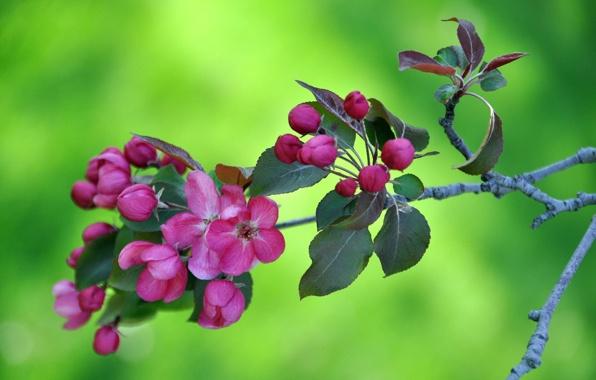 perierga.gr - Η ζωή ξυπνάει στη φύση την άνοιξη σε ένα υπέροχο βίντεο!