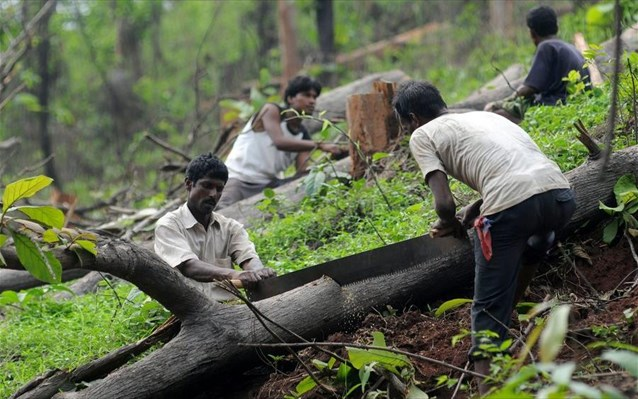 perierga.gr - Η Ινδία επενδύει 5,5 δισεκατομμύρια ευρώ για τη δημιουργία νέων δασών!