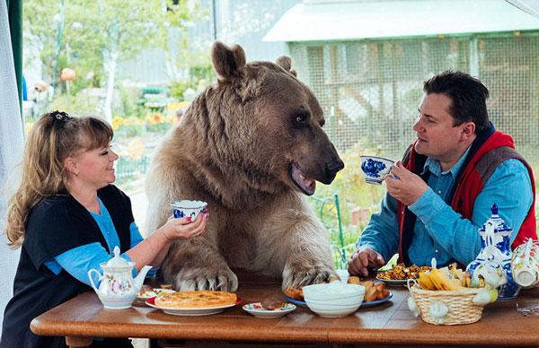 perierga.gr - Αρκούδα ζει σαν... κατοικίδιο με οικογένεια!
