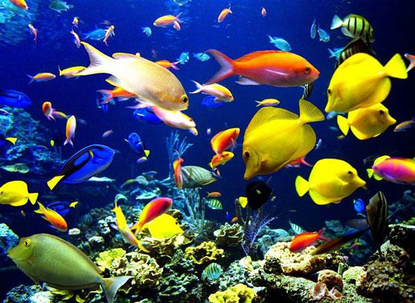 perierga.gr - Τα ψάρια μπορούν να αναγνωρίσουν τα ανθρώπινα πρόσωπα!