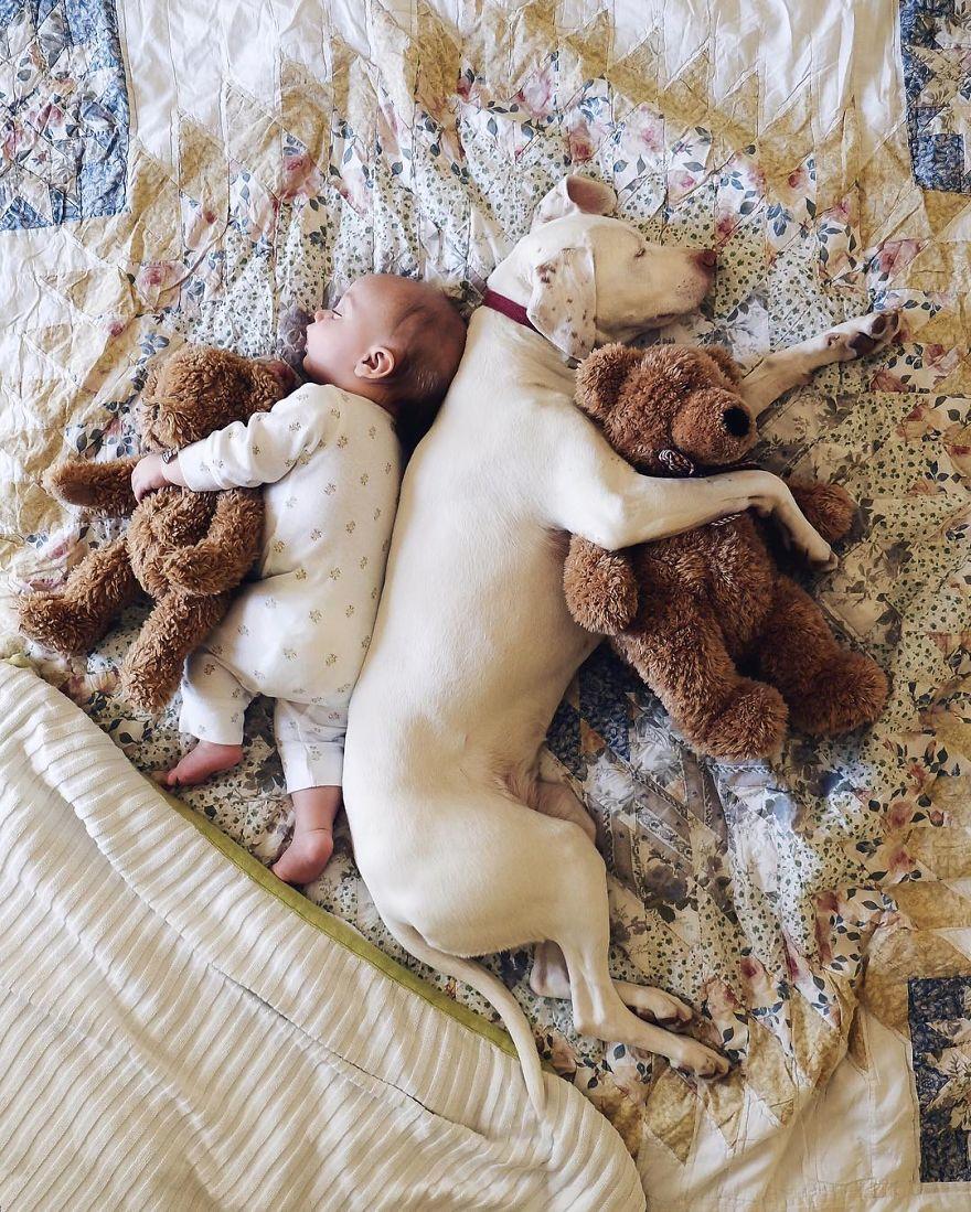 perierga.gr - Oι καλύτεροι φίλοι στον ύπνο!