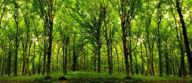 perierga.gr - Τα δέντρα κοιμούνται, απεργούν και θερμαίνουν τον πλανήτη!