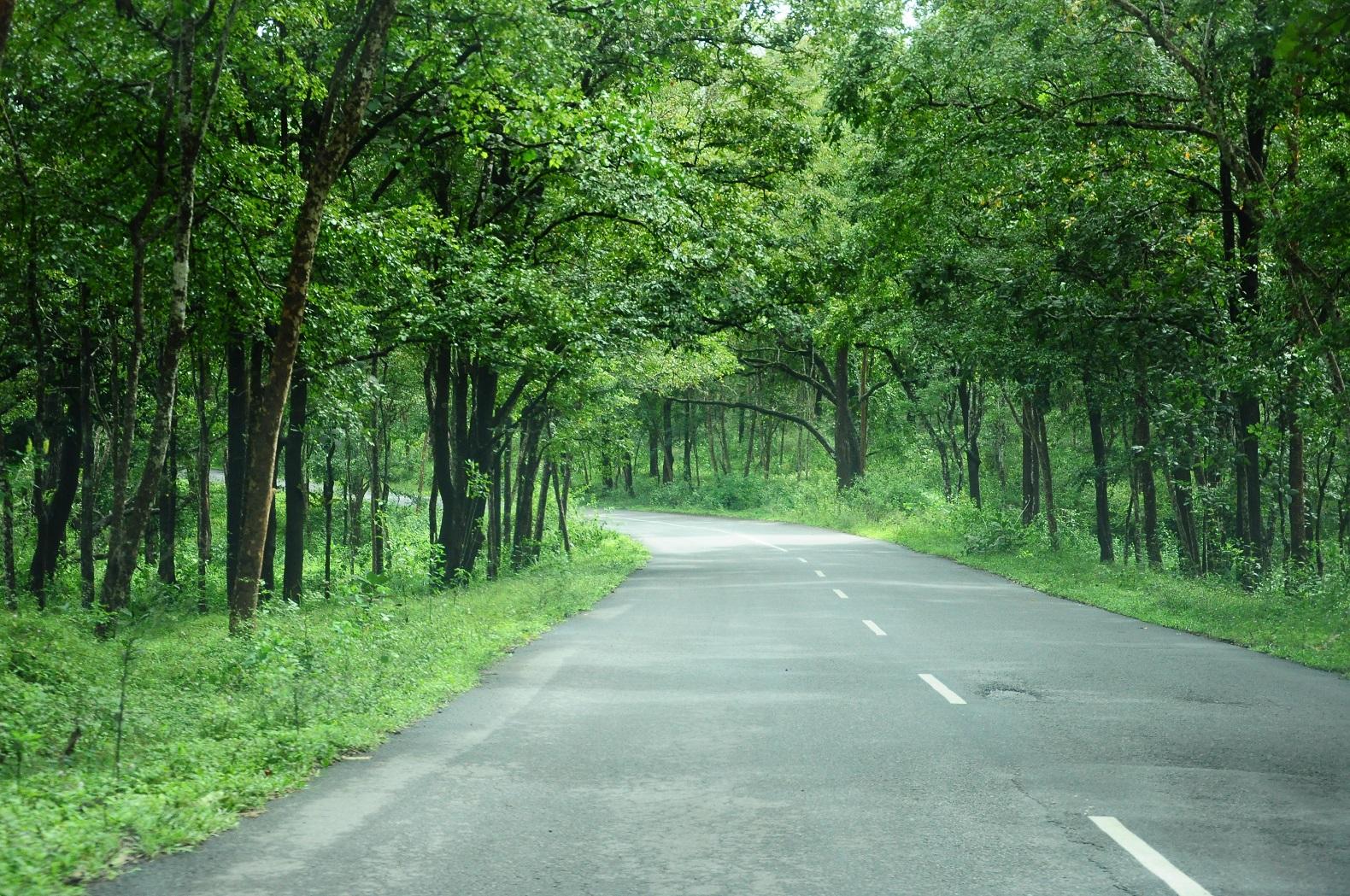 perierga.gr - Ινδική Πολιτεία θα φυτέψει 50 εκ. δέντρα σε 24 ώρες!