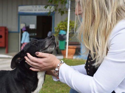 perierga.gr - Πιστός σκύλος περιμένει ακόμα τον ιδιοκτήτη του, 8 μήνες μετά το θάνατό του!