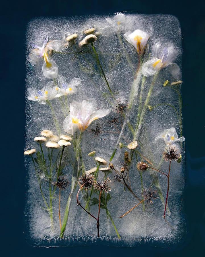 "perierga.gr - ""Παγωμένα"" λουλούδια στο φακό!"