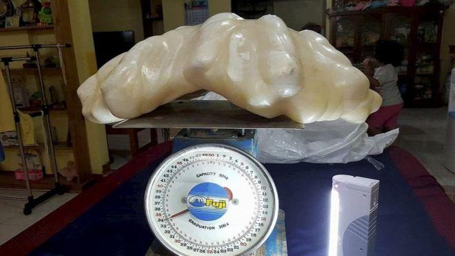 perierga.gr - Στις Φιλιππίνες βρέθηκε «το μεγαλύτερο μαργαριτάρι του κόσμου»!