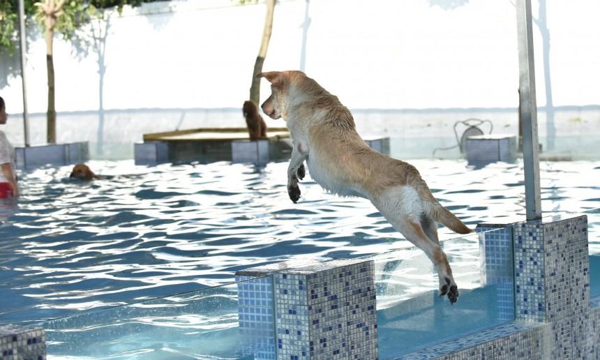 perierga.gr - Άνοιξε η πρώτη πισίνα για σκύλους στη Κίνα!