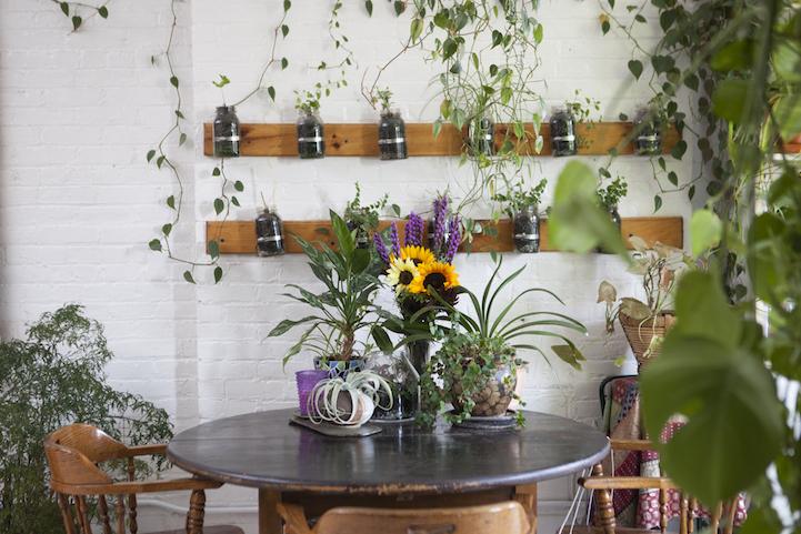 perierga.gr - Καλλιεργεί 500 φυτά σε ένα μικρό διαμέρισμα!