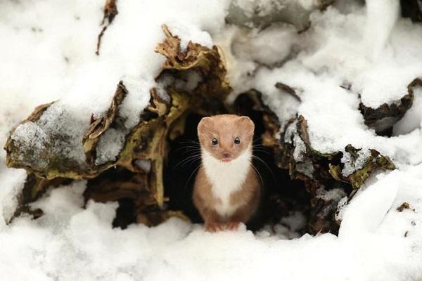 perierga.gr - Νικητήριες φωτογραφίες άγριας ζωής από το Μουσείο Φυσικής Ιστορίας του Λονδίνου!