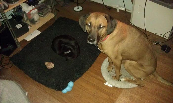 perierga.gr - Γάτες έδιωξαν τους σκύλους από τα κρεβάτια τους!