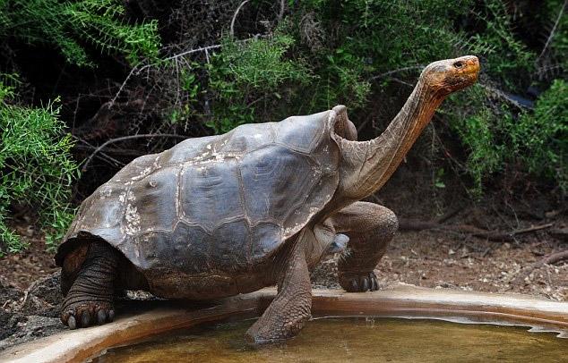 perierga.gr - Η χελώνα που έσωσε το είδος της από την εξαφάνιση!