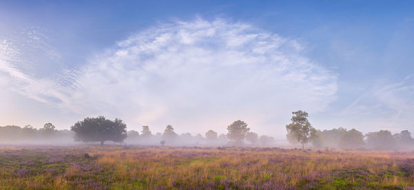 perierga.gr - Ροζ ονειρικά τοπία ερείκης στην Ολλανδία!