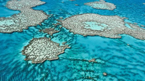 perierga.gr - Ανακαλύφθηκε κοραλλιογενής ύφαλος 7,5 φορές μεγαλύτερος από τη Ν. Υόρκη!