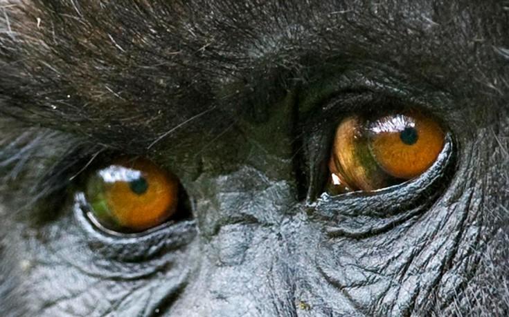 perierga.gr - Aπίθανα μάτια από το ζωικό βασίλειο!