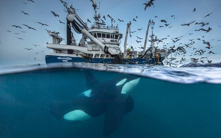 perierga.gr - Οι καλύτερες φωτογραφίες άγριας ζωής για το 2016!