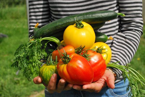 perierga.gr - Βελγικό σουπερμάρκετ πουλά λαχανικά που καλλιεργεί στην ταράτσα του!