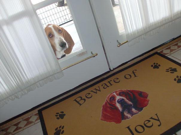 perierga.gr - Προσοχή ο σκύλος... δαγκώνει!