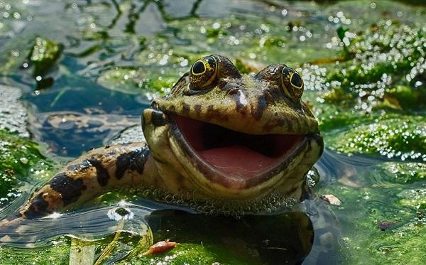 perierga.gr - Κωμικές φωτογραφίες στη φύση προκαλούν... γέλιο!