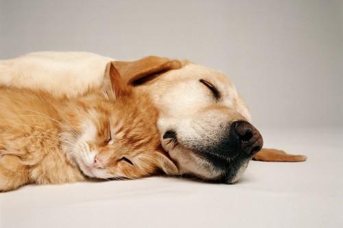 perierga.gr - Τα σκυλιά ονειρεύονται τους ιδιοκτήτες τους!