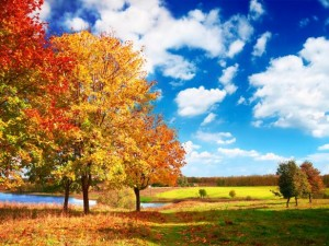 perierga.gr - Η αρμονία του φθινοπώρου σε ένα βίντεο!