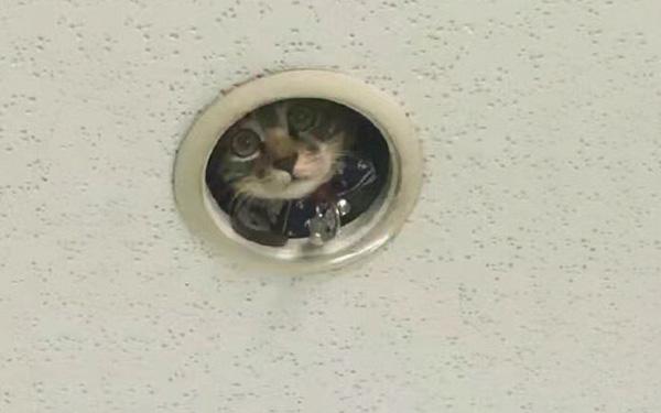 """Μία γάτα """"κατάσκοπος"""" στην Ιαπωνία"""