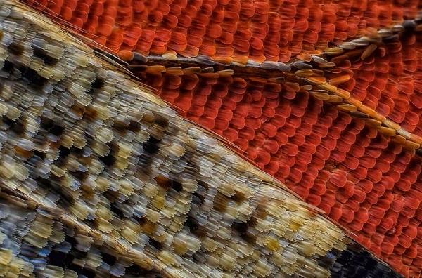 perierga.gr - Υπέροχες εικόνες στο... μικροσκόπιο!