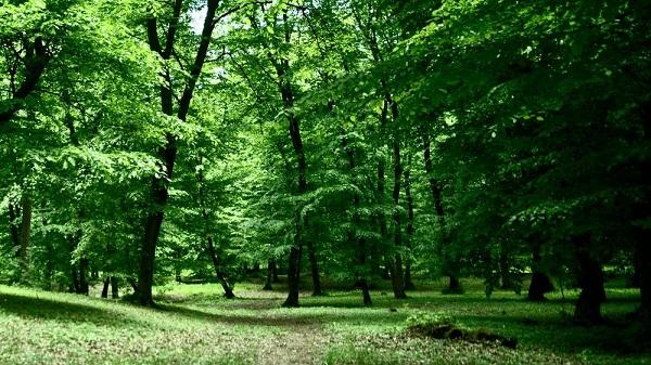 perierga.gr - Τρομακτικά δάση στον κόσμο!