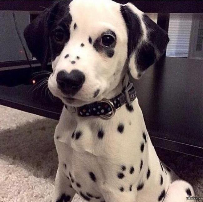 perierga.gr - Σκυλιά με... παράξενο τρίχωμα!
