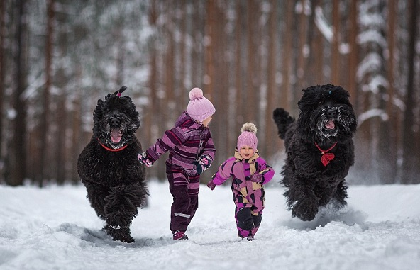 perierga.gr - Μεγάλα σκυλιά φωτογραφίζονται με τους... μικρούς ιδιοκτήτες τους!