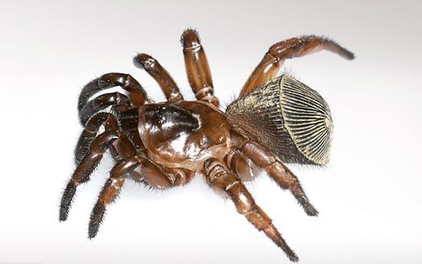 "Perierga.gr-Σπάνια ""αρχαία"" αράχνη βρέθηκε στην Κίνα"