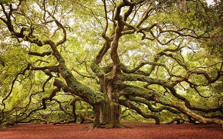 perierga.gr - Τα ωραιότερα δέντρα στον κόσμο!