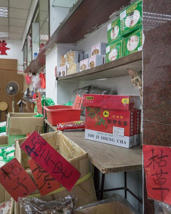 Perierga.gr-Φωτογραφίες με γάτες σε παραδοσιακά καταστήματα