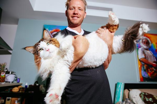 Perierga.gr-Η μεγαλύτερη γάτα στον κόσμο