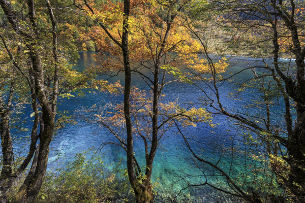 "Perierga.gr-Εντυπωσιακές φωτογραφίες από ""παραμυθένια"" δάση"