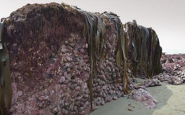 perierga.gr - 2 μ. ανέβηκε ο πυθμένας της θάλασσας στη Νέα Ζηλανδία μετά το σεισμό!