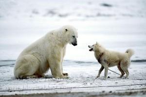 perierga.gr - Το φιλικό χάδι μιας αρκούδας σε σκύλο γίνεται... viral!