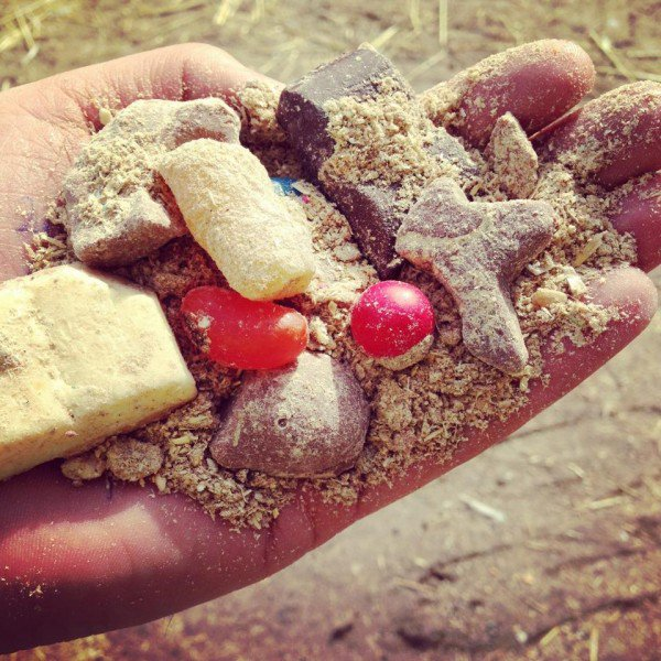 Perierga.gr-Αυστραλός ιδιοκτήτης φάρμας ταΐζει τις αγελάδες με σοκολάτα