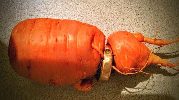 perierga.gr - Βρήκε τη βέρα του 3 χρόνια μετά... σε ρίζα καρότου!