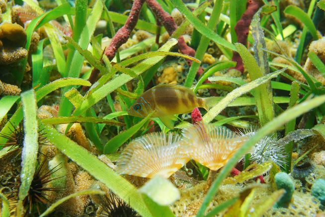 perierga.gr - Σαν τις μέλισσες της θάλασσας, το πλαγκτόν γονιμοποιεί τα φυτά των ωκεανών