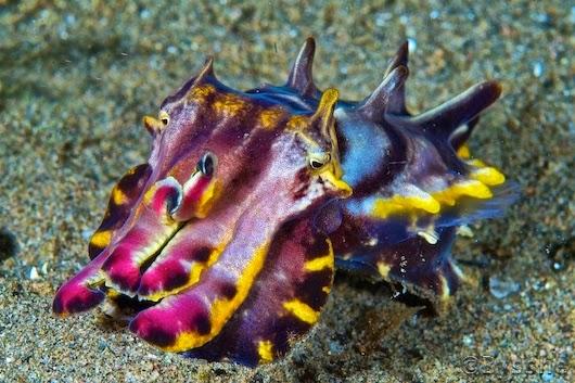 perierga.gr - Μικροσκοπικοί υποβρύχιοι... ιπποπόταμοι!