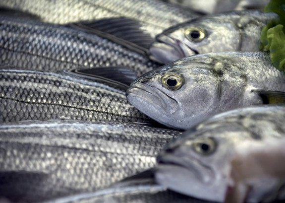 perierga.gr - Τα λέπια ψαριών είναι η ανανεώσιμη πηγή ενέργειας του μέλλοντος;