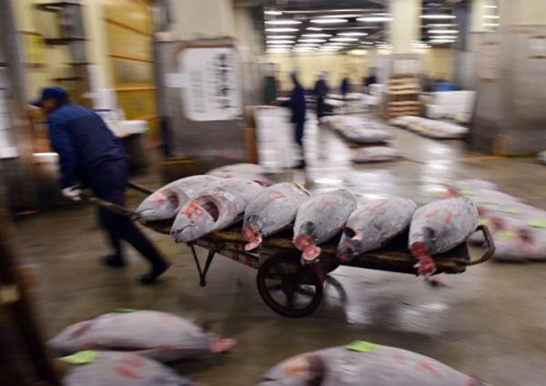 Perierga.gr-Το 2048 δεν θα υπάρχουν άλλα ψάρια για να τραφούμε