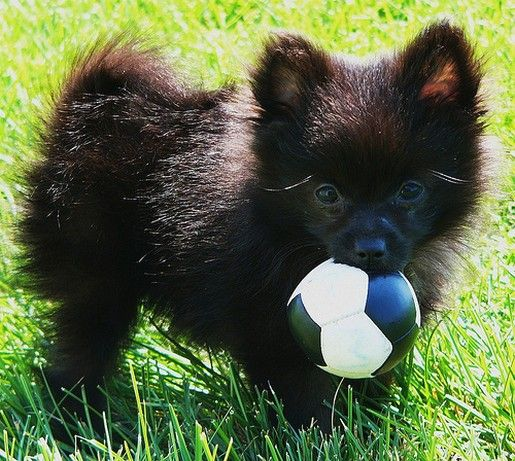 perierga.gr - Πανέξυπνος σκύλος παρακινεί άγνωστους περαστικούς να παίξουν μπάλα!