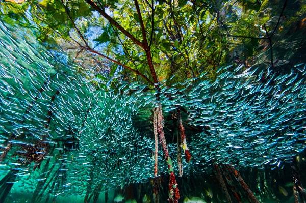 perierga.gr - Ψάρια κολυμπούν ανάμεσα στα δέντρα!
