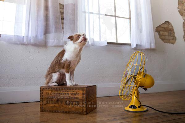 perierga.gr - Σκυλιά VS ανεμιστήρων!