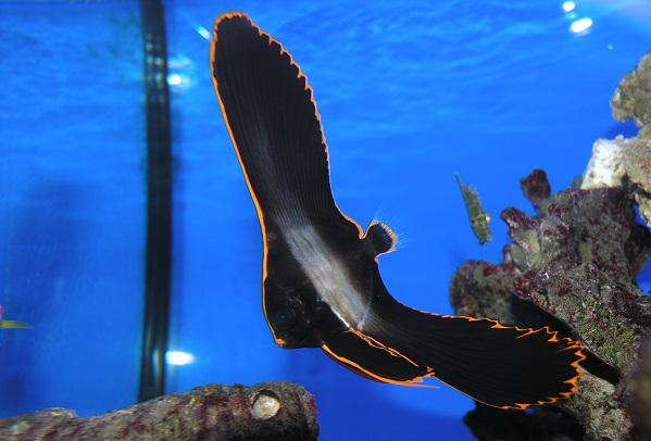 perierga.gr - Ασυνήθιστο ψάρι στο φακό!