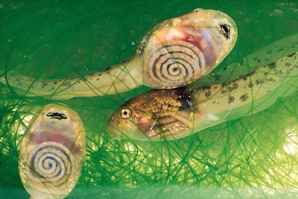 perierga.gr - Διάφανα ζώα που εντυπωσιάζουν!